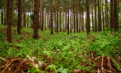 Carbon Neutrality By Planting Forests